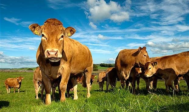 Good news for Cork beef farmers with improved access for Irish beef to the US market